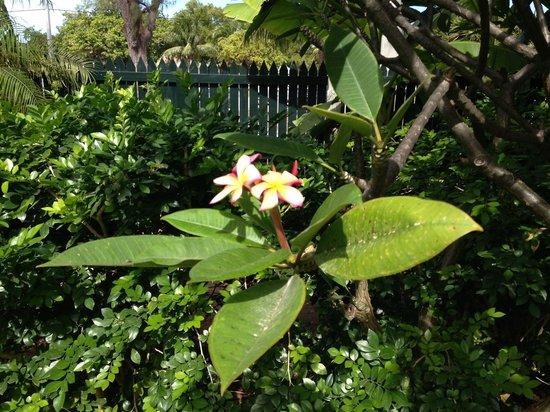 Key West Garden Club : Garden Club