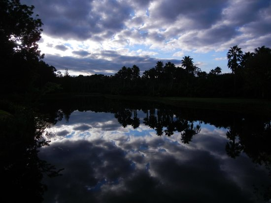 Disney's Coronado Springs Resort : Reflection at Dawn