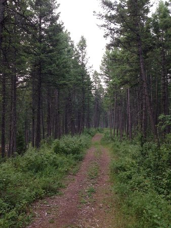 Timber Wolf Resort: Trail