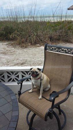 Suntan Terrace : Pug approval