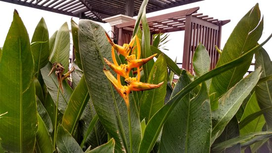 Chalelarn Hotel Hua Hin : These flowers were all around a sitting area on the upper floor.