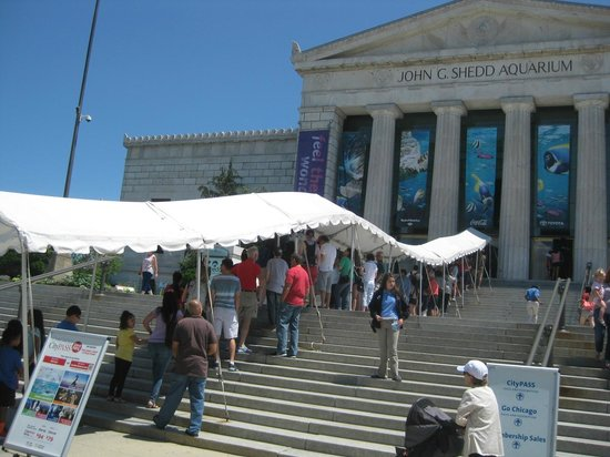 Shedd Aquarium : entry queue
