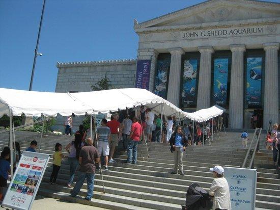 Shedd Aquarium: entry queue
