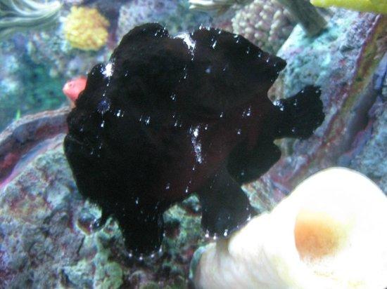 Shedd Aquarium: many interesting fish