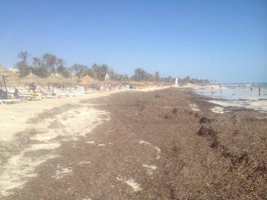 Diana Beach Hotel : La plage pas nettoyé 1 semaine!