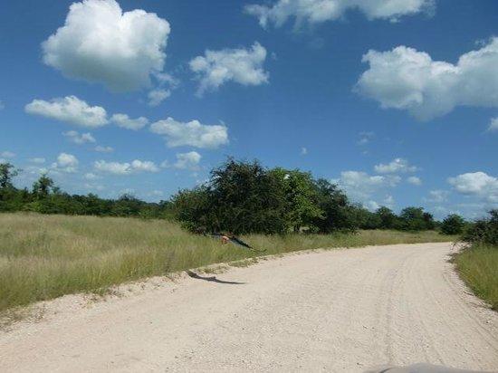 Bateleur Bushveld Camp: Daar vliegt de Bateleur op (maart 2014)