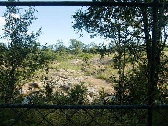 Bateleur Bushveld Camp: Uitzicht op de wildernis buiten het hek van Bateleur Boskamp (maart 2014)