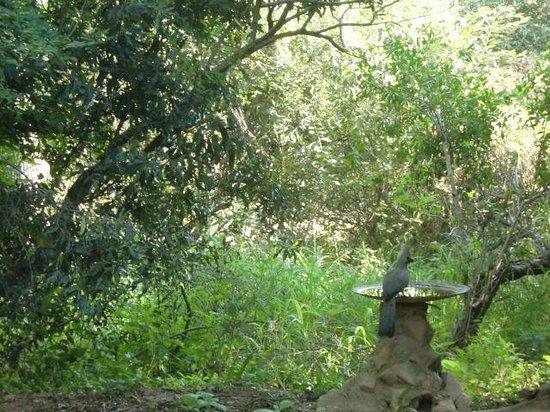 Bateleur Bushveld Camp: Ons uitzicht vanuit huisje nr. 6 (maart 2014)