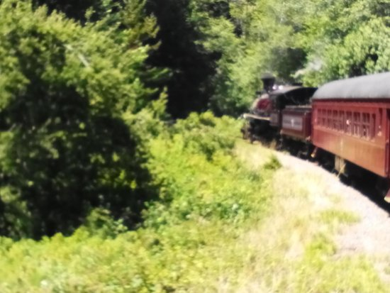 Skunk Train: Through the forest
