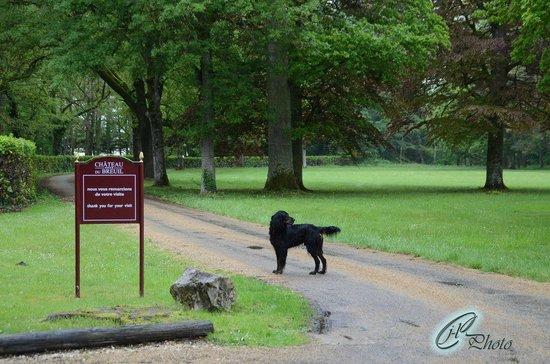 Chateau du Breuil : le chien du chateau