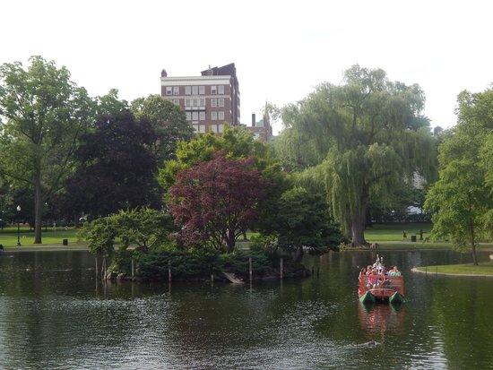 Boston Public Garden: pond in the garden