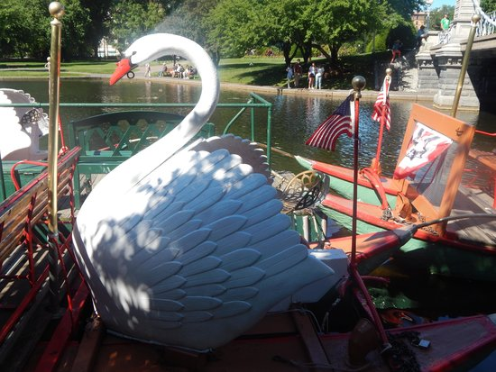 Boston Public Garden: Swan boats