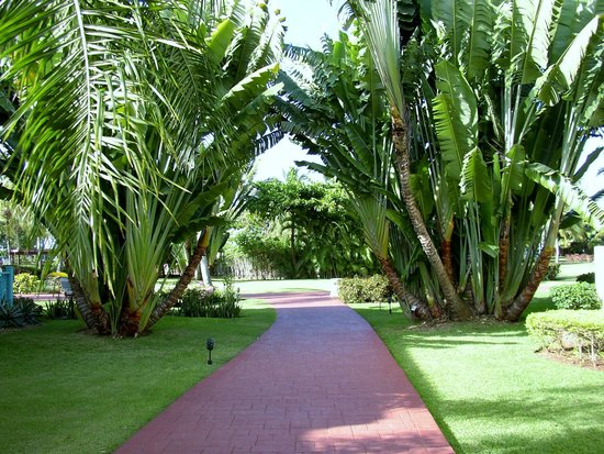 Dreams La Romana Resort & Spa : Gardens arelovelly