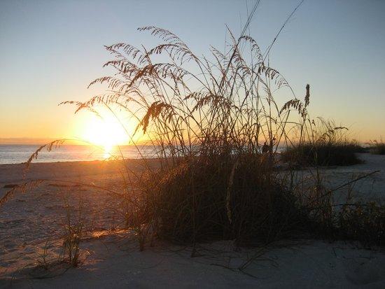 Waterside Inn on the Beach : Beach grass