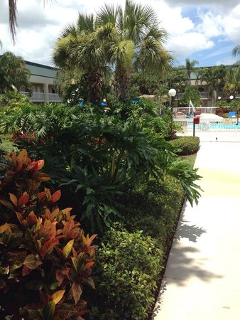Hampton Inn Clearwater Central : Yard