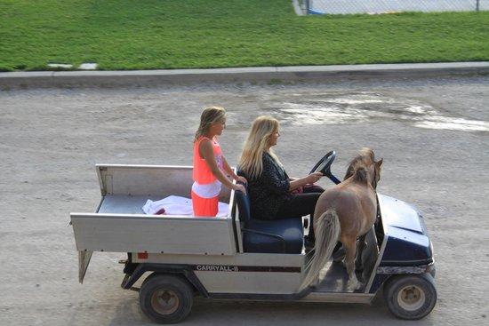 Big Bear Motel : Pony Ride!