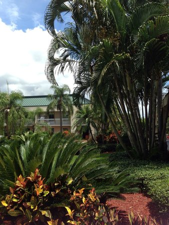 Hampton Inn Clearwater Central: By pool