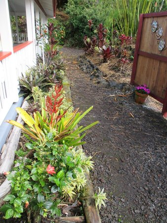 Lokahi Lodge : Plantings around hotel