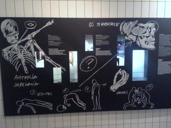 Musée archéologique du Tyrol du Sud : Oetsi display