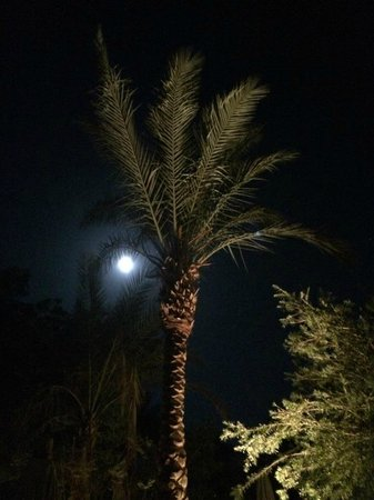 The Grand Hotel Sharm El Sheikh: Beautiful evening in the hotel grounds