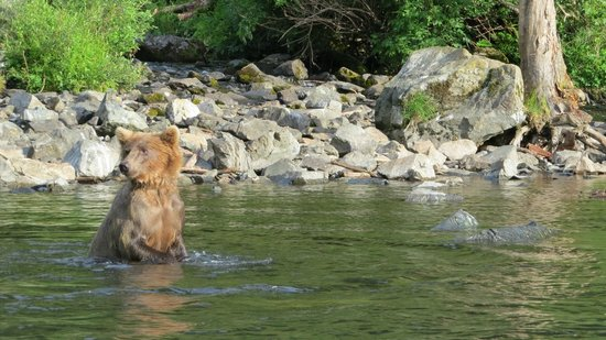 Alaska Fishing & Lodging: Bears fishing too