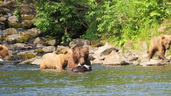 Alaska Fishing & Lodging: Hungry