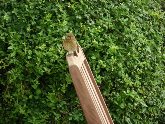 Summer Hill Country House: Mike's Baby Robin at Summer Hill