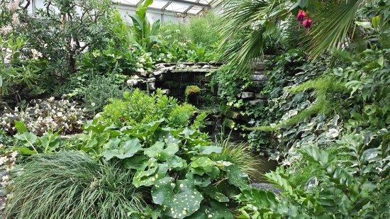 Cool House, Allan Gardens Conservatory