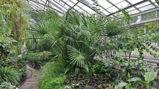 Palm House, Allan Gardens Conservatory