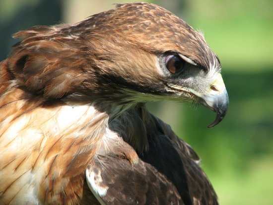 Black Mountains Falconry Centre: Wonderful photo opportunities