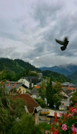 Krim Hotel: View from our room, bird included :) July and it was always raining :/