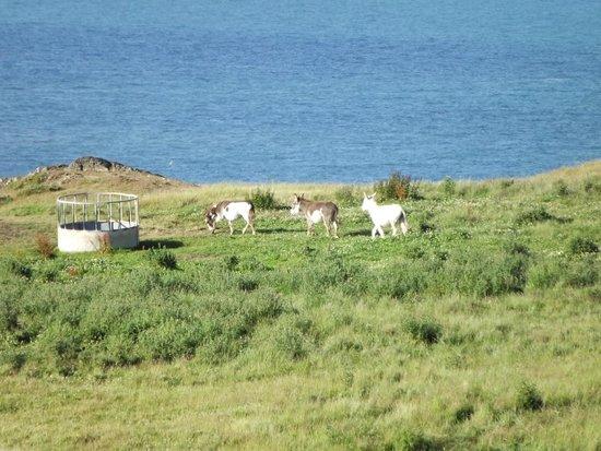 Nant Y Croi Farmhouse: The farm donkeys