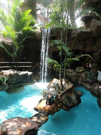 Dallas World Aquarium : Waterfall