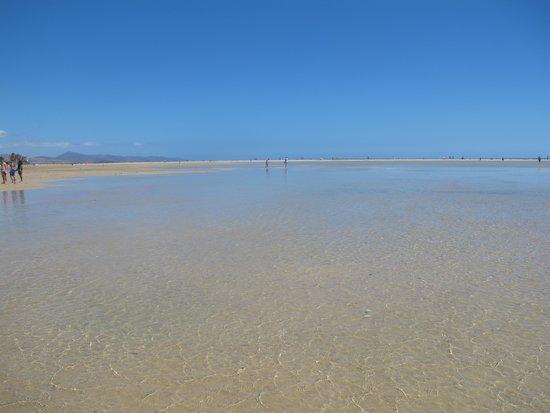 Laguna de Sotavento : ..la marea...