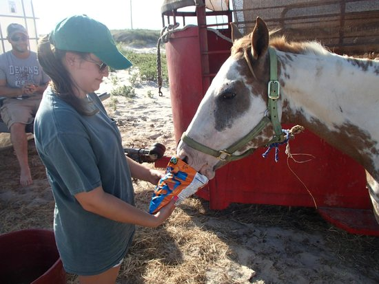 S-n-G Horseback Riding : A little snack for the ride!