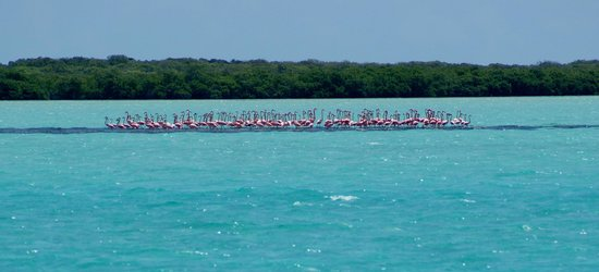 Anegada Island: Flamingo