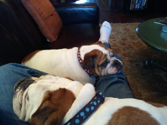 The Reynolds Mansion : B&B pups