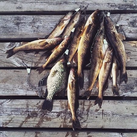 Timber Bay Lodge and Houseboats: Walleye and Crappie