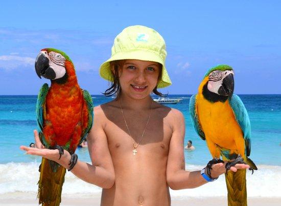 Royalton Punta Cana Resort & Casino: На пляже с попугаями