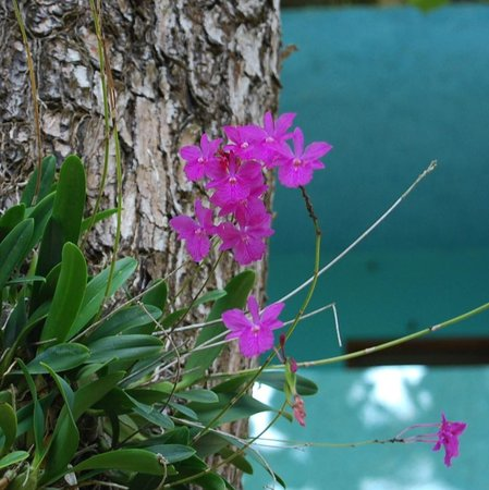 Nirvana on the Beach : More orchids on the property