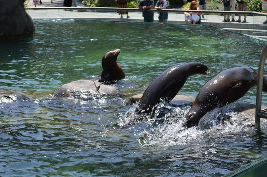 Central Park Zoo: Sealions