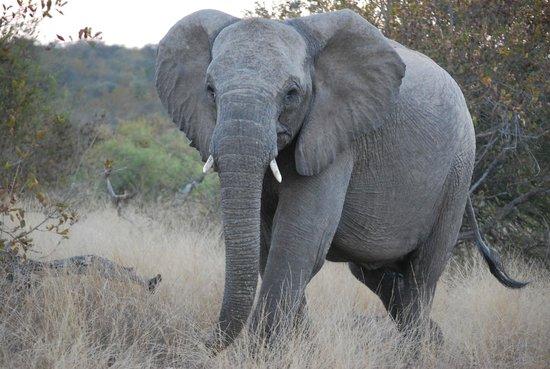 nDzuti Safari Camp : Elephant Sighting