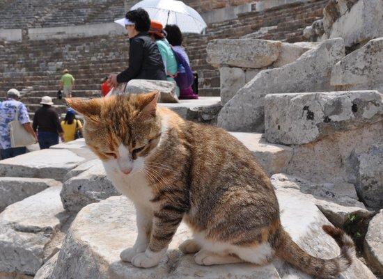 Efes Antik Kenti Tiyatrosu : visitors