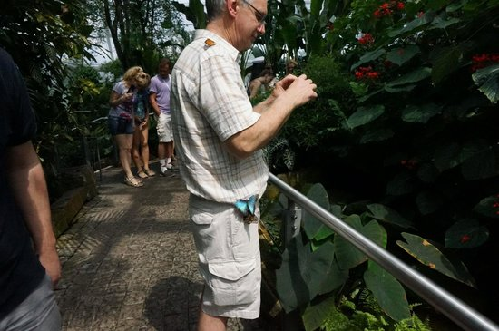 Niagara Parks Butterfly Conservatory: So many butterflies landed!