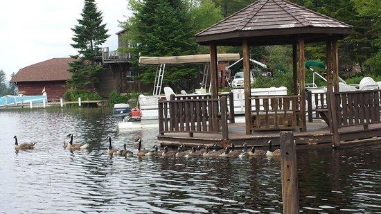 Big Moose Inn : Ducks swimming around the Pagoda