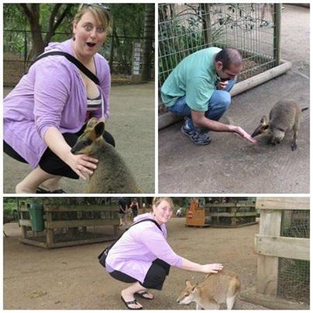 Featherdale Wildlife Park: loved being able to pet the animals
