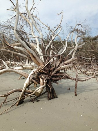 Little Talbot Island State Park: An Entire Driftwood Forest on the North End of the Island