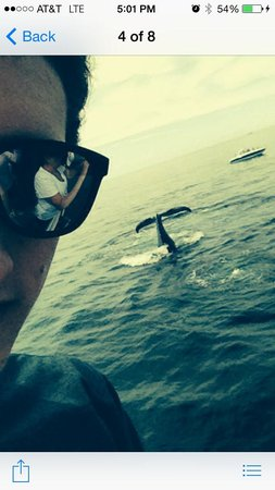 "Dolphin Fleet Whale Watch: ""selfie"" with a whale"
