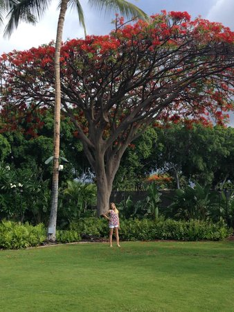 Fairmont Orchid, Hawaii: Hotel grounds near tennis courts