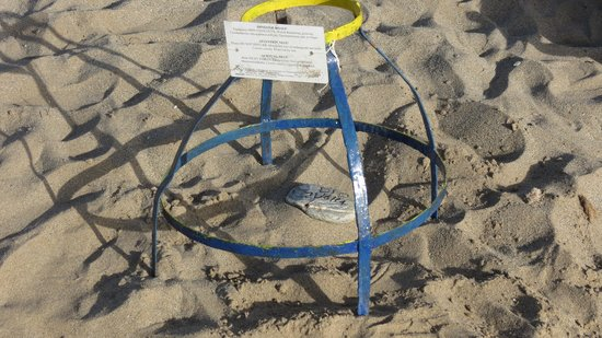 Aquila Rithymna Beach Hotel : Protection des oeufs de tortue Caretta